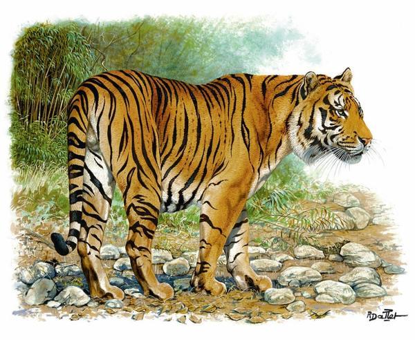 为促进保护大型猫科动物